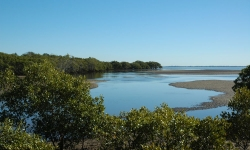 mangroves and bay at low tide inside tabbil ban dhagan Nudgee beach